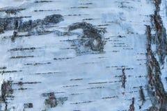 Макрос снял текстуры коры березы стоковое изображение rf