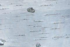 Макрос снял текстуры коры березы стоковое фото rf