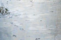 Макрос снял текстуры коры березы стоковое изображение
