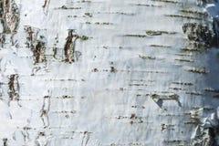 Макрос снял текстуры коры березы стоковые фотографии rf