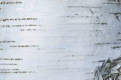 Макрос снял текстуры коры березы стоковое фото