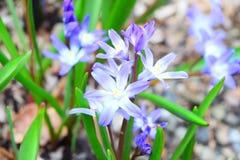 Макрос снятый крошечных пурпурных цветков стоковое изображение rf