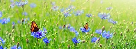 Макрос снятый на 2 бабочках и цветках Стоковое фото RF