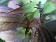 Макрос снятый от сети паука и завода Стоковая Фотография RF