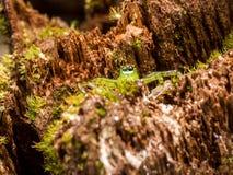 Макрос снятый паука стоковая фотография