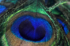Съемка макроса пера павлина Стоковые Фото