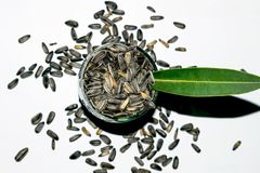 Макрос снятый семян цветка солнца стоковые изображения rf