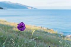 Макрос снятый фиолетового цветка Стоковые Изображения