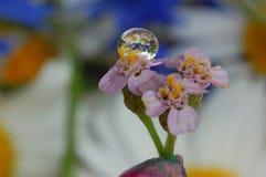 Макрос снял цветков, падения на заводе и завода в падениях стоковое фото rf