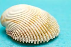 Seashells на голубой предпосылке Стоковые Фотографии RF