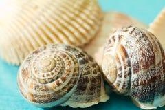 Seashells на голубой предпосылке Стоковые Изображения RF