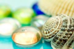 Seashells на голубой предпосылке Стоковые Фото