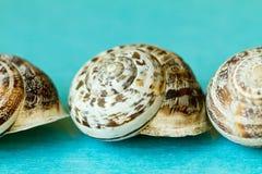Seashells на голубой предпосылке Стоковые Изображения
