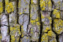 Макрос старой расшивы дерева с мхом Стоковые Изображения
