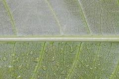 Макрос текстуры лист и падения воды Стоковое Фото
