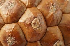 Макрос текстуры imbricate шестиугольных масштабов конуса сосны Стоковая Фотография RF