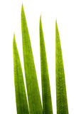 макрос травы лезвий супер Стоковая Фотография