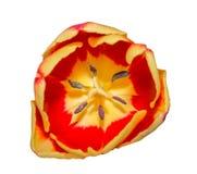 Макрос тюльпана конца-вверх пыльников при зерна цветня изолированные на w Стоковые Фотографии RF