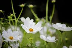 Макрос флористический стоковое фото