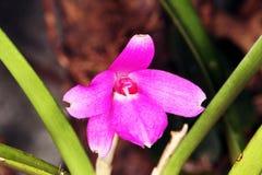 Макрос-фото фиолетового цветка орхидеи стоковая фотография