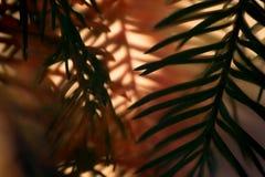 Макрос хворостины дерева Christas Стоковое фото RF
