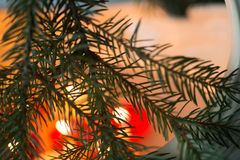 Макрос хворостины дерева Christas Стоковое Фото