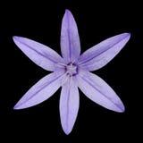 Макрос цветка лепестка пурпура 6 изолированного на черноте Стоковое Изображение RF