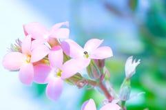 макрос цветка поля глубины Стоковое Фото