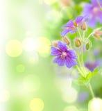 макрос цветка поля глубины Стоковые Фотографии RF