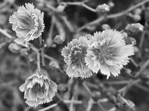 Макрос цветка сада стоковое фото