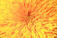 Макрос цветка хризантемы Стоковые Фото