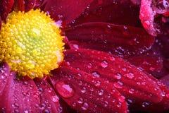 макрос цветка стоковое изображение