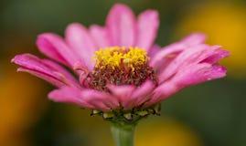 Макрос цветка Стоковые Фотографии RF
