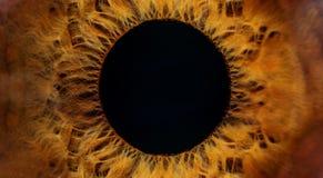 Макрос человеческого глаза Брайна стоковое изображение rf