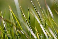 макрос v1 травы Стоковая Фотография RF