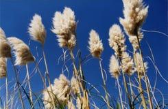 максимум травы вверх будет Стоковые Фото