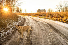 Макси на задней дороге Стоковые Фото