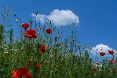 Мак - голубое небо Стоковая Фотография