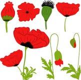 Мак отдельных цветков элементов красный: цветки, листья, bolls, бутоны Стоковое Изображение RF