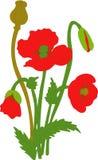 Мак отдельных цветков элементов красный: цветки, листья, bolls, бутоны Стоковая Фотография