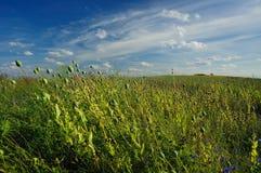 мак поля Стоковая Фотография