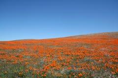 мак поля california Стоковые Изображения RF