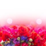 Мак, сладостный горох и цветки мозоли Стоковое фото RF