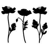 Мак цветет иллюстрация вектора нарисованная рукой изолированная на белой предпосылке, декоративном черном силуэте, флористическом Стоковое Изображение RF