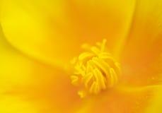 мак california Стоковые Фотографии RF