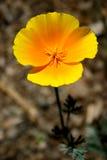 мак california Стоковые Изображения RF