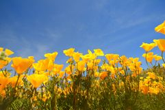 мак california Стоковое Изображение