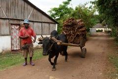 Малагасийская тележка вола катания фермера в любопытном, Мадагаскар Стоковые Изображения