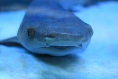 Малая акула в аквариуме Стоковое Фото