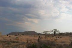 Малая африканская деревня с imbondeiros anisette Стоковое Изображение